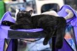 Приюты для животных избавились от черных кошек спасибо, будем надеяться, фильм